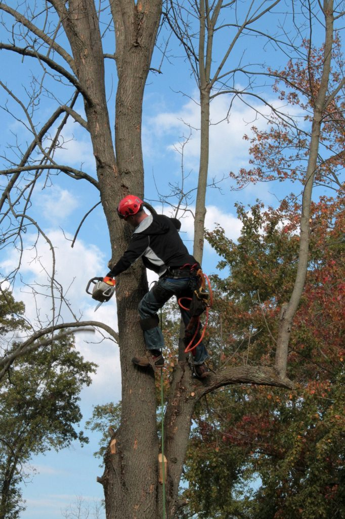 tree trimming, tree trimmer, landscape work, dead tree branch removal